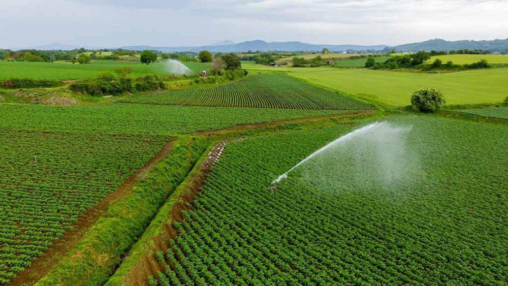 Campo di coltivazione della Patata dell'Alto Viterbese I.G.P.