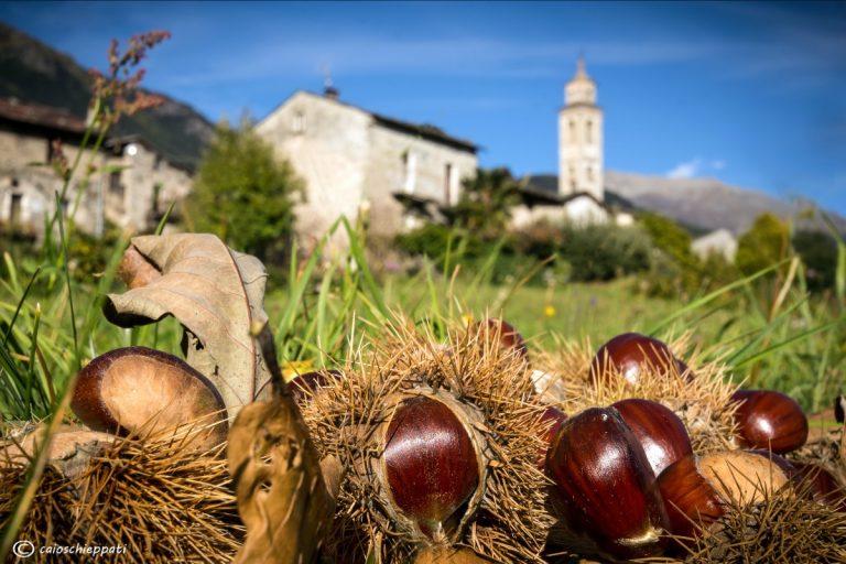 Castagne in Trentino-Alto Adige